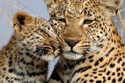 Chui Safaris